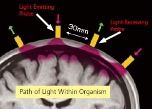 Detecting Near-Infrared Light Reflected from the Cerebral Cortex
