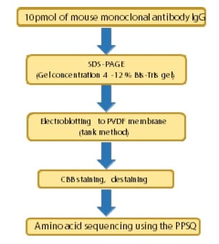 Fig. 1 Protocol for N-Terminal Amino Acid Sequencing