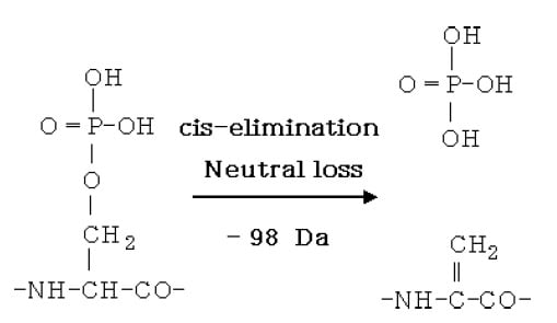 Fig.1 Ser Phosphate Modification and Neutral Loss
