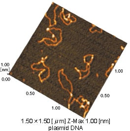 Fig.1 AFM image of plasmid DNA