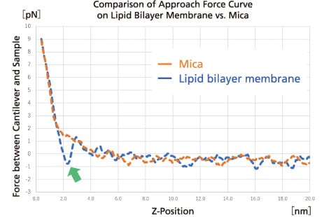 Comparison of Approach Force Curve on Lipid Bilayer Membrane vs. Mica