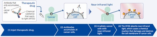 Mechanism of How  Cancer Photoimmunotherapy Works